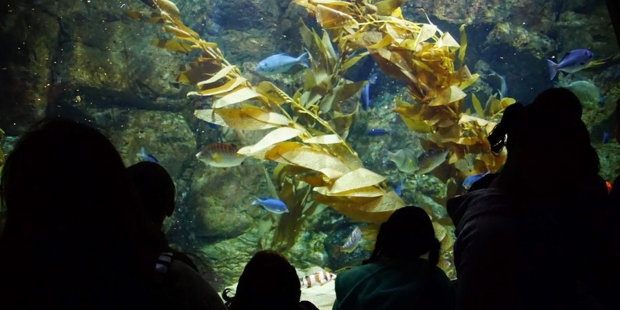 families viewing kelp forest at oregon coast aquarium